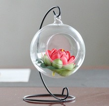 clear hanging glass globe vase , air plant sign different types glass vase