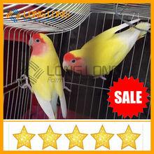 wholesale bird cage wroughtiron sale large bird cage chinese bird cage