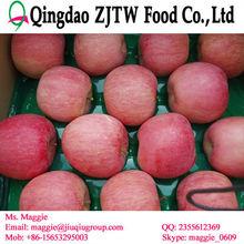 Best price fuji apple bulk apples whole sale