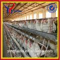 Batterie de haute qualité pour la vente des poules( iso9001 usine)