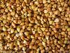 Wild buckwheat rhizome p.e, buckwheat sheller, husker and buckwheat huller from Chinese buckwheat suppliers