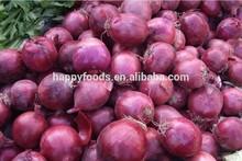 Fresh onion fresh fruits company dubai apricot jam