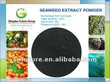 seaweed extract from kelp source seaweed powder