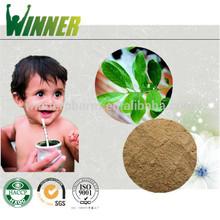 100% Natural Yerba Mate Extract/Yerba Mate Extract Powder/Yerba Mate Wholesale