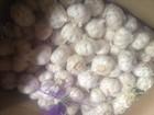 garlic for sale 2014