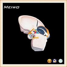 model of diencephalon human brain model