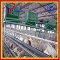 Pvc kaplı veya galvanizli ihracat canlı kuş( ISO9001 fabrika)