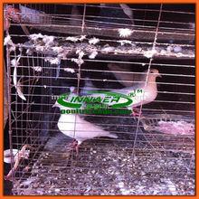 Bird use galvanize racing pigeon cage