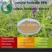 Coleus forskohlii (Willd.) Briq/Coleus Forskohlii Extract 10%/natural forskolin 98% coleus forskohlii extract