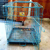 Popular sale Hebei Dog Cages