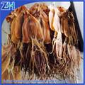 7-9pcs/kg atacado exportação secas squid frutosdomar preço
