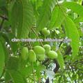 Natural extrato de folha de oliveira / composto de ervas chinês