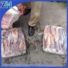 300-400g frozen illex argentina squid wholesale price seafood supplier