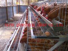 taiyu chicken cage egg poultry farm in ugandan