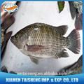 Tilapia congelada pescado totalmente alimentado en granja redonda de rebajas