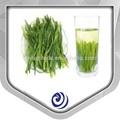 китайский зеленый чай, moringa чай, органических, пищи