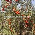 Dried fruits goji berries