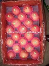 Best Price Fuji Apple