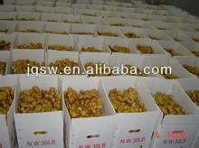 30LB 250G for USA ,CA market prices for ginger