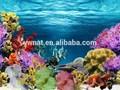 de concha de coral do oceano mundo aquário aquário de fundo fotos pintura