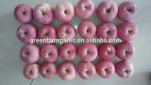 best quality Qinguan Apple