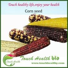Purple corn seed/hybrid corn seed/glutinous corn seed