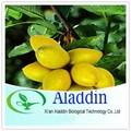 Extrato de folha de oliveira oleuropein, Antioxidante Hydroxytyrosol 10% ~ 80%