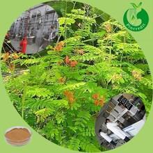Mimosa hostilis root extract/mimosa hostilis powder/mimosa hostilis 1kg
