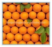 Navel Orange Wholesale Fruit Prices