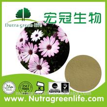 GMP Organic Echinacea Extract/Echinacea Purpurea Extract/Polyphenols 4%/Chicoric Acid 10:1