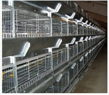Multi-tier Layer Chicken H type Layer Cages With best quality