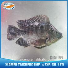 Tilapia Organic Fish Farming Tilapia Floating Feed Price