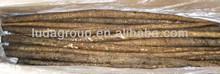fresh burdock root china supplier