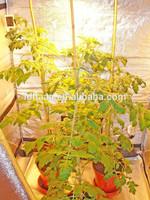 Portable Indoor Greenhouse Indoor Grow Tent for Hydroponics
