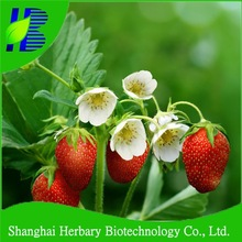 Professional seeds company supply hybird strawberry seeds