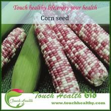 Touchhealthy a granel de alimentación híbrido semillas / Pop Corn variedades / colorido de maíz variedades / mejor semillas para plantación