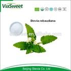 Stevia rebaudiana Extract Rebaudioside A Stevioside
