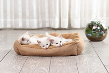 Popular Luxury Dog Bed/Warm Bed For Dog