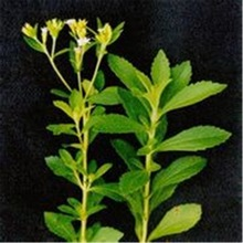 High quality stevia extract in bulk stock, worldwide fast delivery