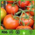 Pas cher frais tomate prix