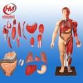 170cm músculo do corpo humano com órgãos internos 28 partes do corpo humano modelo muscular