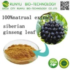 100% natural plant extract siberian ginseng leaf hot sale