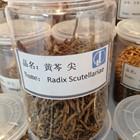 Crude herb medicine Radix Scutellariae