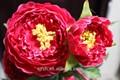 plástica artificial de seda arranjos florais para casamento