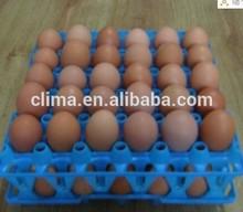 plasic egg tray for transfering