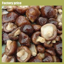 Mushroom Whole in Drum