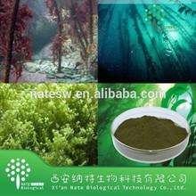 100% Organic Organic Kelp extract /Seaweed Extract / Polysaccharides