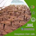 100% natural extracto de ganoderma de troncos de madera de frutas cultivadas cuerpo polisacáridos 10%- 50% triterpeno 1%- 8%