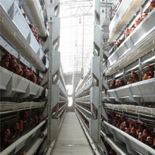 first class quality H frame poultry equipment for layer