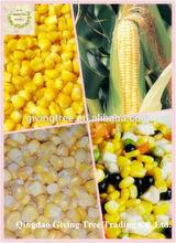 From Qingdao Factory Frozen Sweet Corn